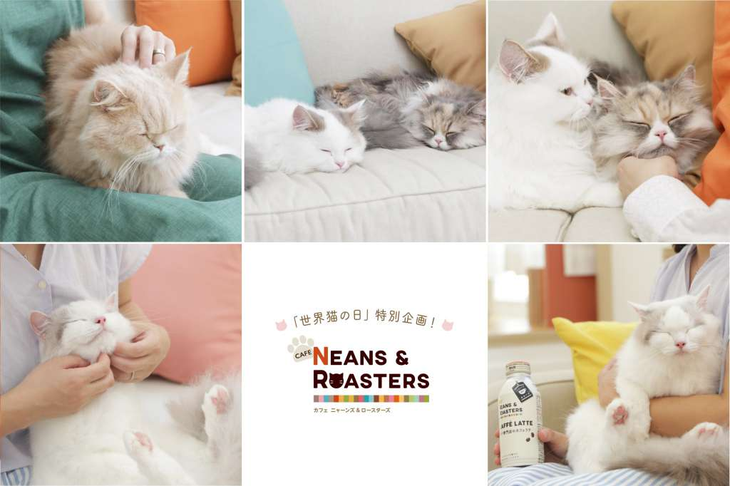 """8月8日「世界猫の日」は、猫とほっこり癒される1日に! """"BEANS & ROASTERS""""×世界猫の日 =""""NEANS & ROASTERS"""" 8通りの猫の癒し方を教えてくれる 「#ほっこりニャレンジ」動画公開!"""