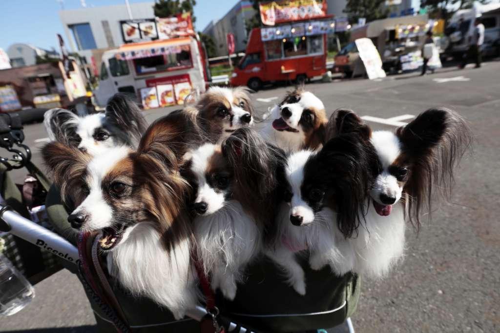 お台場キャンピングカーフェアはペットの入場も大歓迎!ペットも飼い主も楽しめる大人気エリア「わんわんエリア」を開設