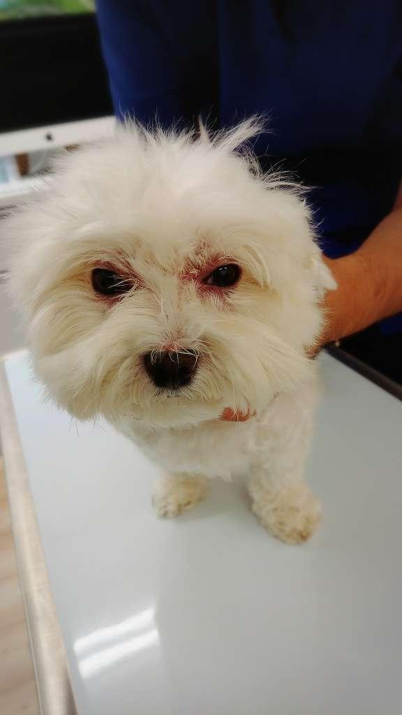 日本の犬猫のうち一番多いとされているのが皮膚病で、人と同様にスキンケアの重要性が話題