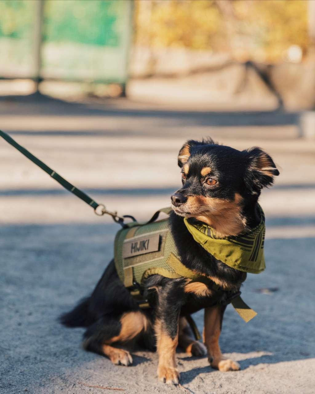 キロナイナを着用した犬