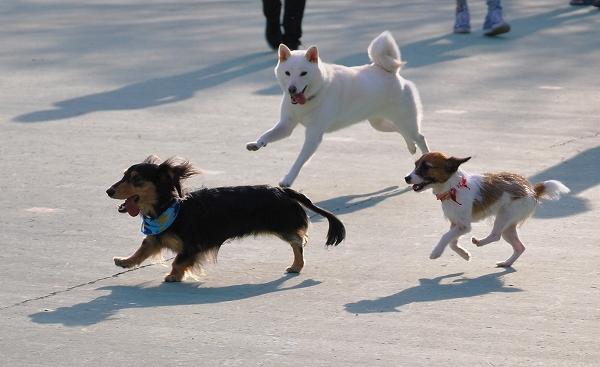 公園に限定ドッグランがオープン!マナーアップを伝える「いこいの森公園Dog Festa」2019年10月5日(土)開催(西東京いこいの森公園)