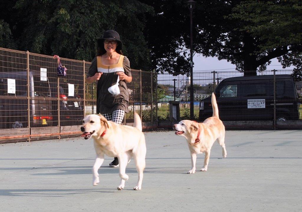 限定ドッグラン「ワン!Day Dog Run」(西東京いこいの森公園)