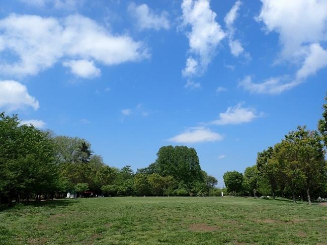 原っぱ広場(西東京いこいの森公園)