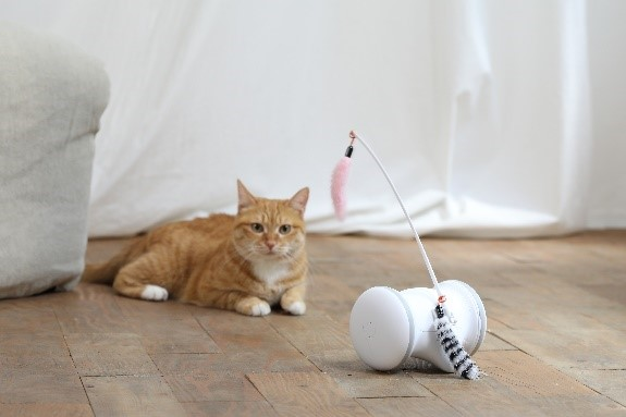 犬だけではなく猫も楽しく遊べるよう猫用のキッドセットを用意