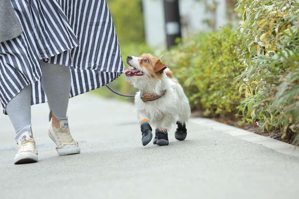 犬に靴が必要なワケ
