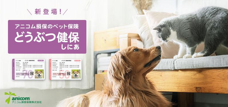 日本初!「シニア専用」のペット保険。新商品「どうぶつ健保しにあ」を販売開始!