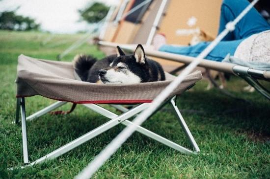 スノーピーク「愛犬と一緒に楽しむアウトドア」イベント第一弾を開催 9月11日から受付開始