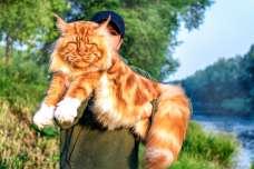 メインクイーンの大きさはギネス記録! その体長や体重はどれくらい?