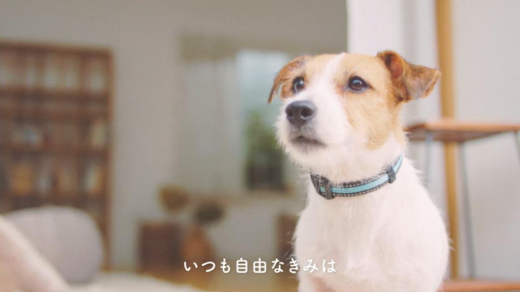 登場する愛犬(2)名前:てん