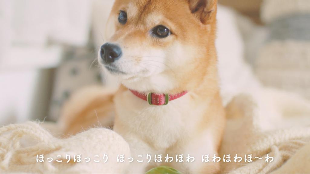 登場する愛犬(4)名前:なな