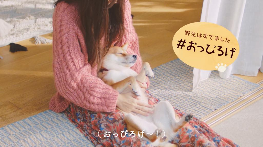 """#愛犬ほっこりあるある(3)""""野生はすてました""""『#おっぴろげ』"""