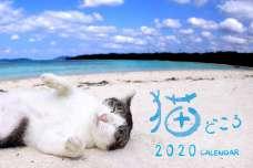 令和になっても愛らしい!肉球マニアに捧ぐカレンダー 恒例「猫どころ2020」1部1000円 産経iDで販売