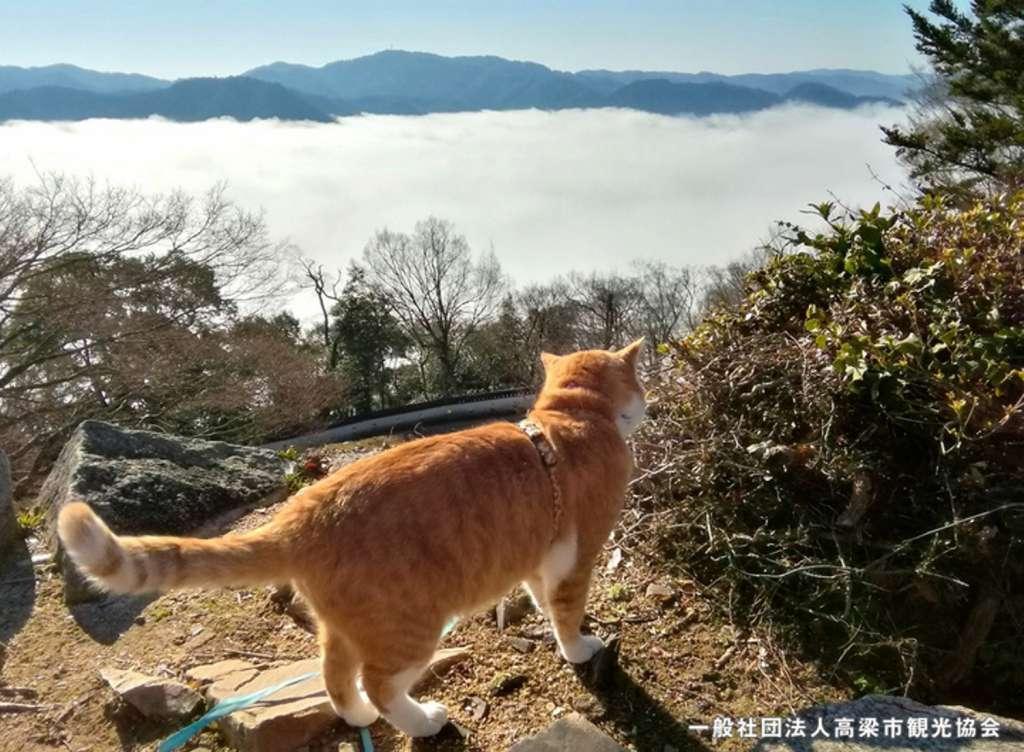 雲海を眺めるさんじゅーろー