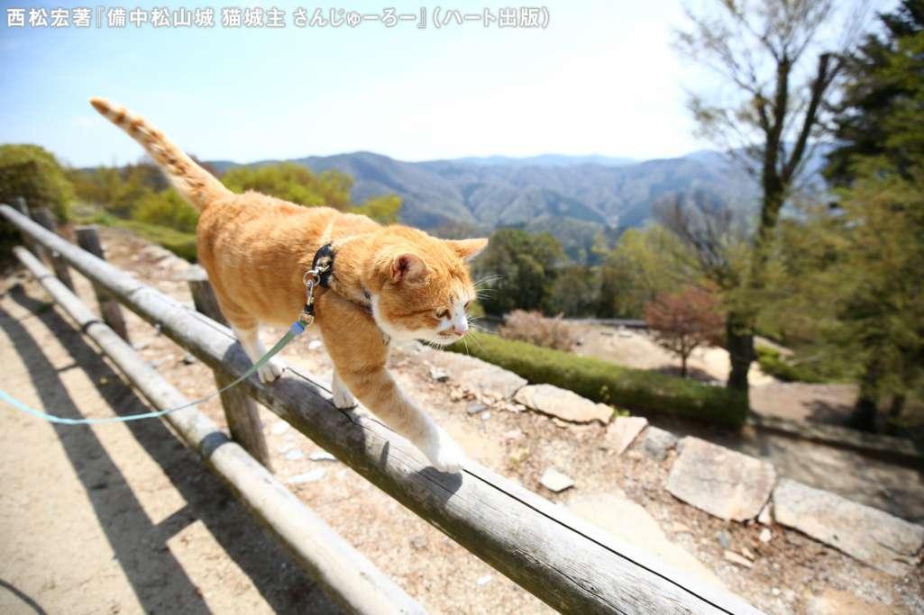 山城からの眺めは格別にゃー