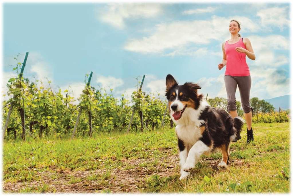 愛犬家の9割がやる気・継続性・絆などのメリットを実感! 健康のための運動は「愛犬と一緒」が効果的!