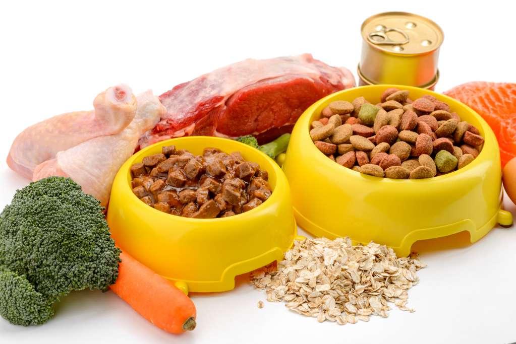 ラグドール健康な皮膚と被毛の維持に欠かせないタンパク質とアミノ酸