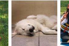 楽天トラベル、2019年 全国の宿 自慢の「看板犬ランキング」を発表