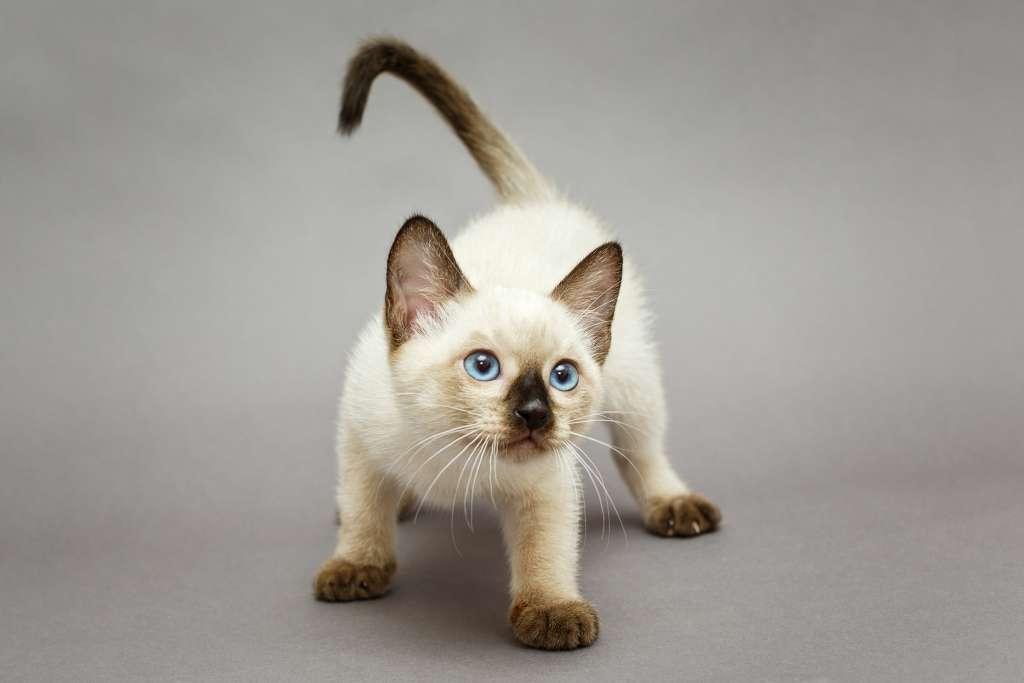 猫がしっぽの先端がUの字になる=不安になっている・遊びに誘いたい