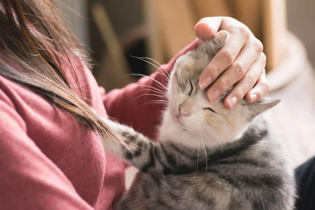 猫は男性よりも女性の高い声を好む