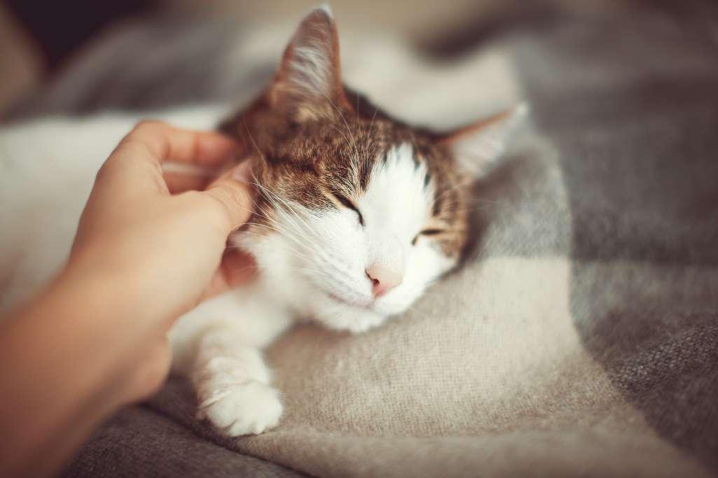 猫がリラックスしているときに触りしつこくしない