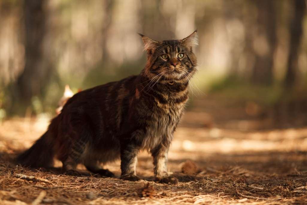 猫がしっぽをだらんと垂らしている=身構えている