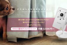 【アドベント】どうぶつWiFiにペット見守りカメラのセットプランを追加、11/23(土)より受注開始