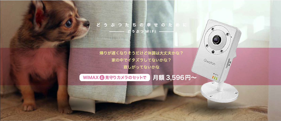 【アドベント】どうぶつWiFiにペット見守りカメラのセットプランを追加、11/23(土)より受注開始。