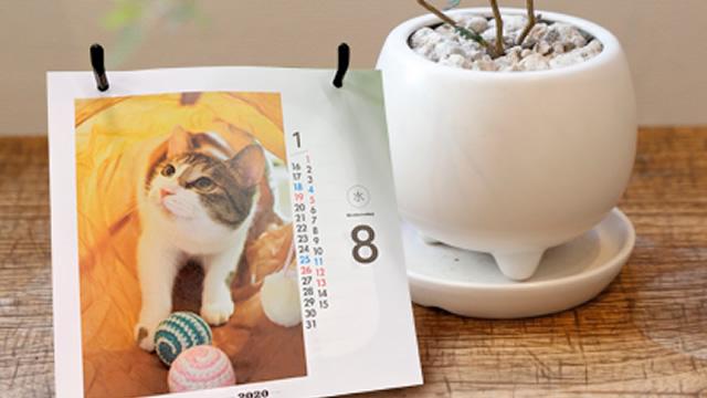 カレンダー掲載イメージ(ニャンコ)