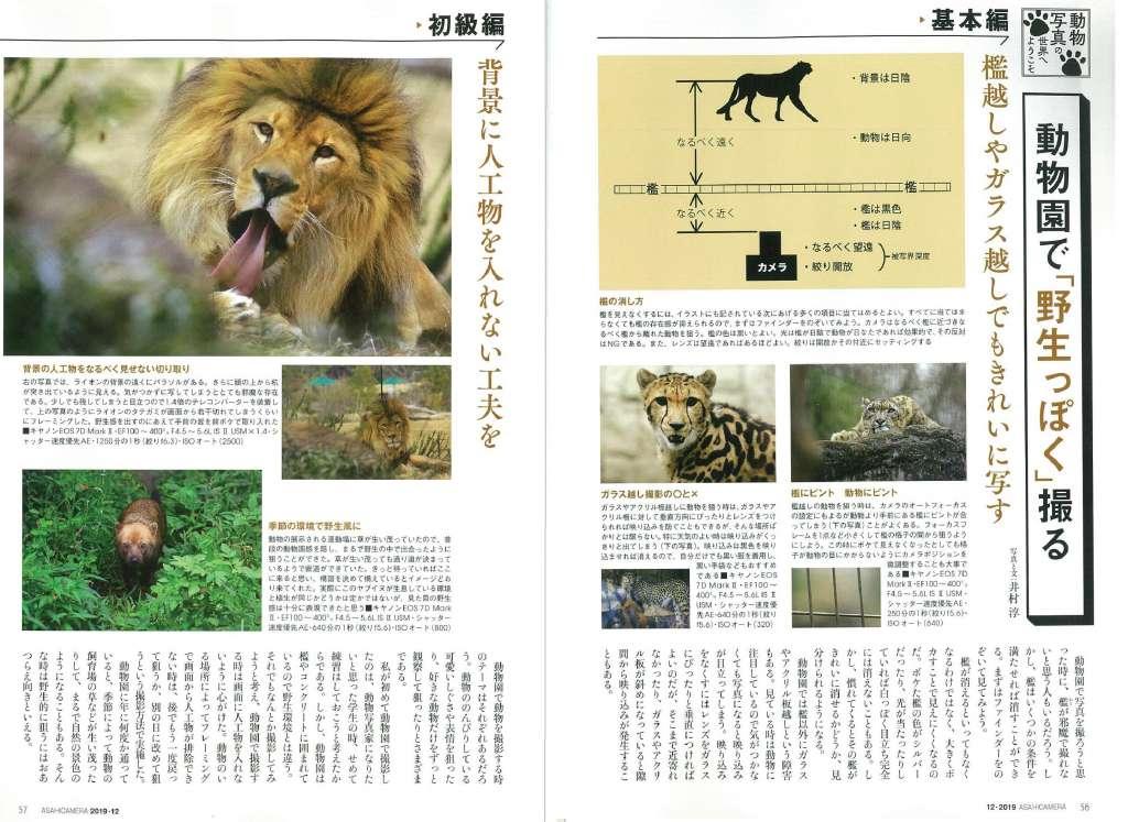 日本に生息する身近な野生動物の見つけ方や撮影地ガイド、被写体として人気の高い野鳥の捉え方
