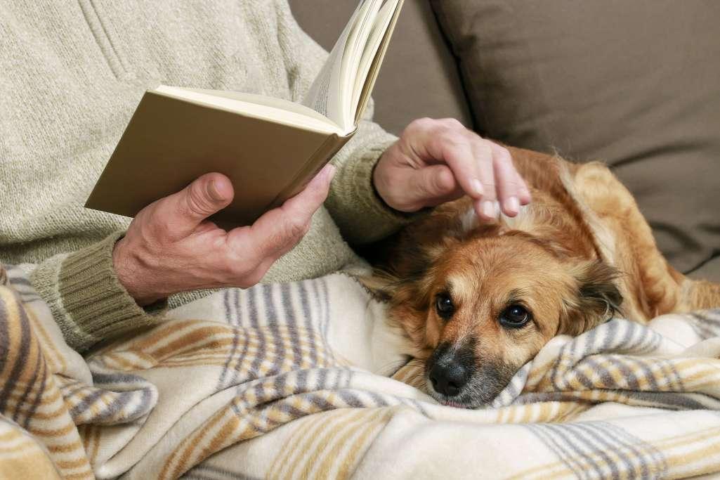【シニアのペット事情】一人暮らしでペットの世話ができなくなった場合のことを考えていない方は6割!