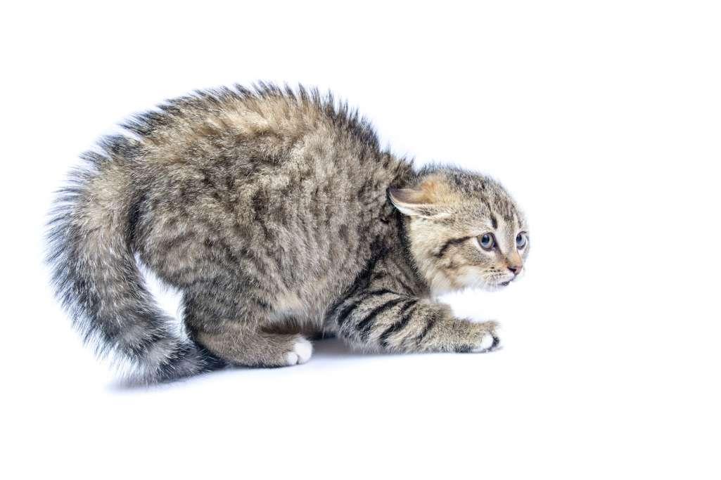 猫がしっぽを体の下に巻き込む=怖がっている・警戒している