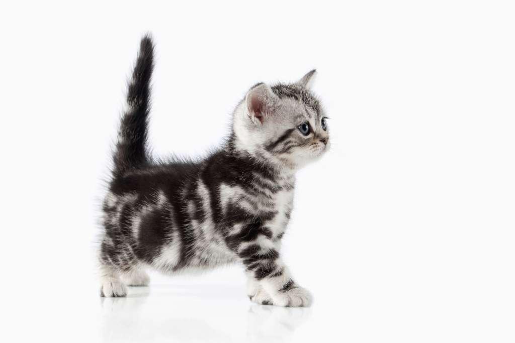 猫がしっぽを立てる=好意がある・子猫のように甘えたい