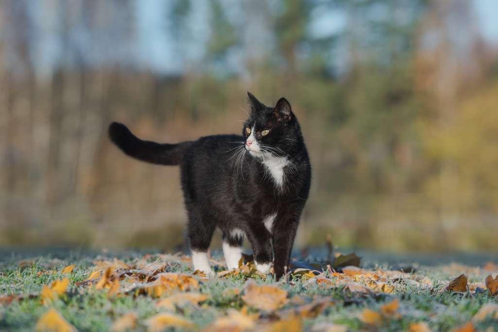 猫がしっぽが水平になっている=リラックスしている