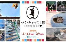 『ねこのひょっこり展 in KiKiYOCOCHO』展示作品募集 会場が猫の写真で埋め尽くされる! 来年2月15日から大丸札幌店