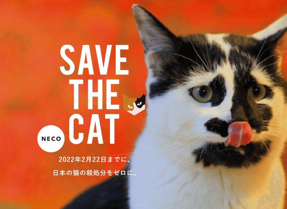 愛猫のためのプレゼントを購入することが猫助けに繋がります
