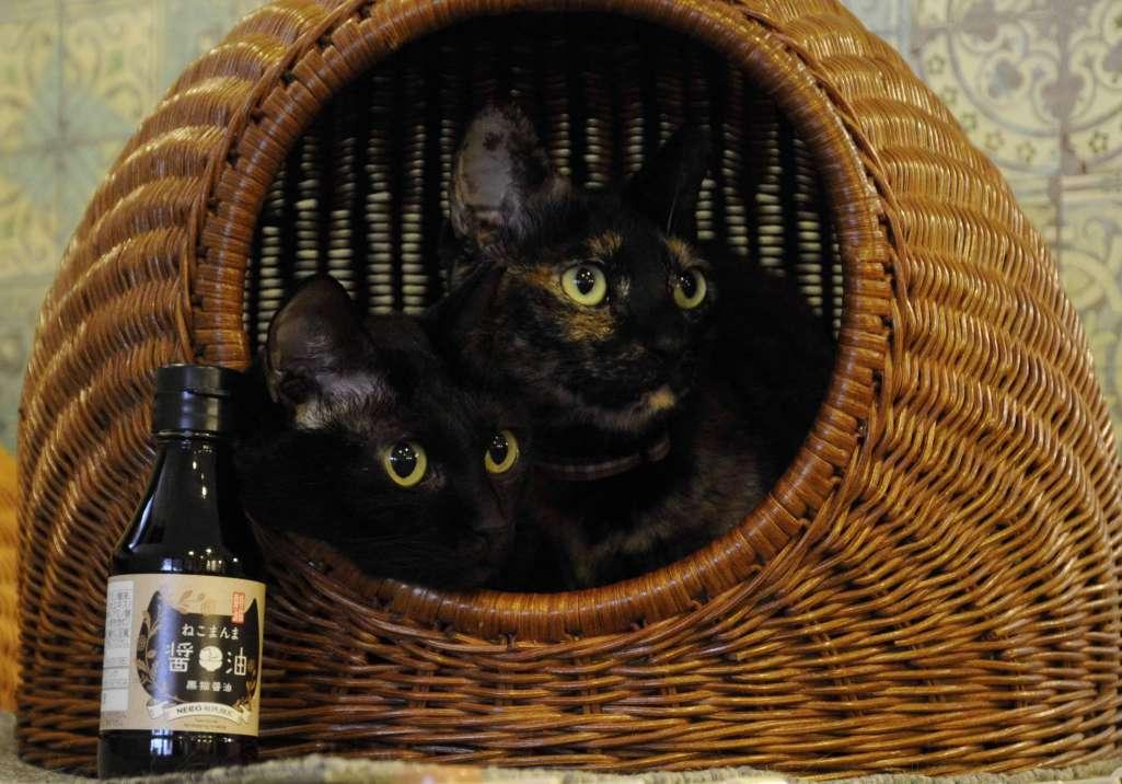 「黒猫醤油」はたまり醤油でうま味もいちばん強いため、鷄やぶりの照り焼き、まぐろの漬け丼などに