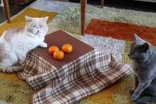 ネコ専用こたつがついてくるネコ好きのためのみかん「猫と、こたつと、思い出みかん」が正式発売スタート