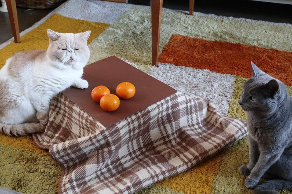 ニャンとご予約だけで1,300箱突破!ネコ専用こたつがついてくるネコ好きのためのみかん「猫と、こたつと、思い出みかん」が正式発売スタート。