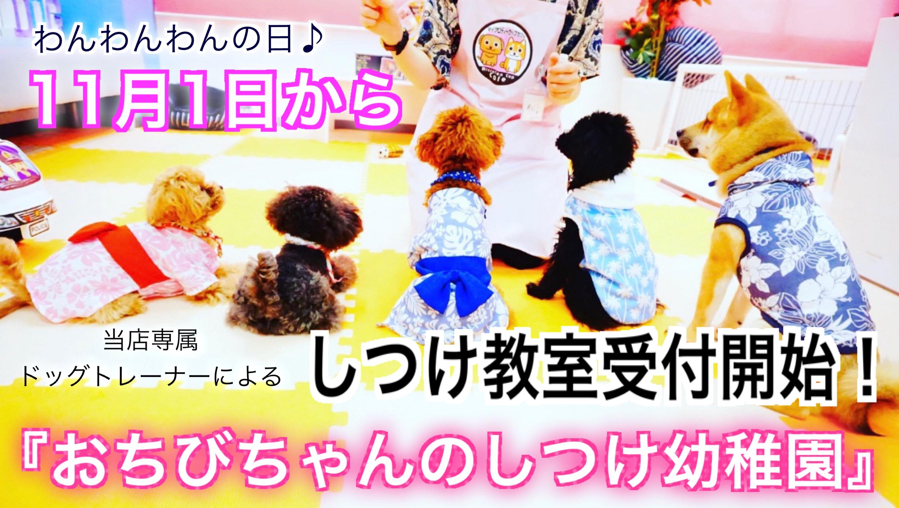 日本初!犬カフェの運営するしつけ教室『おちびちゃんのしつけ幼稚園』愛犬のしつけでお困りの方に専属ドッグトレーナーが安心、安全、確実なしつけを!
