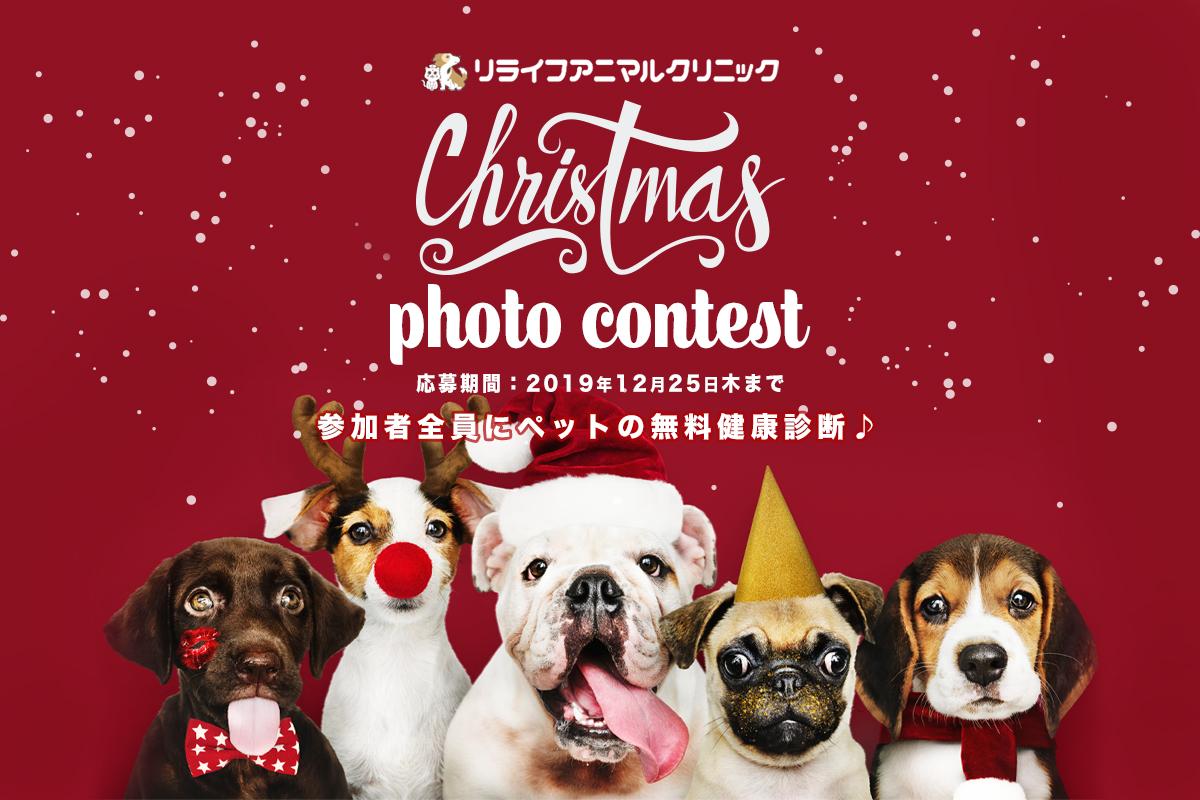 【大好評開催中、大切なペットの写真で豪華クリスマスプレゼントを手に入れよう!】ワンちゃんネコちゃんと参加するクリスマスイベント!豪華賞品が当選するクリスマスペットフォトコンテスト開催中!