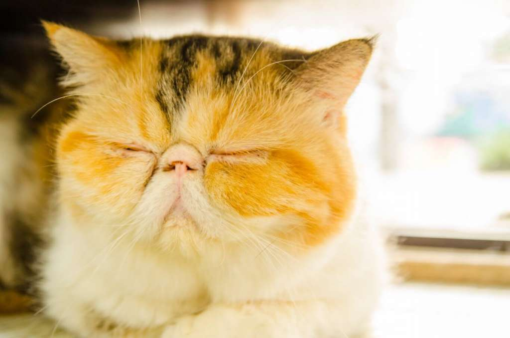 眠たそうな目はとにかくかわいい