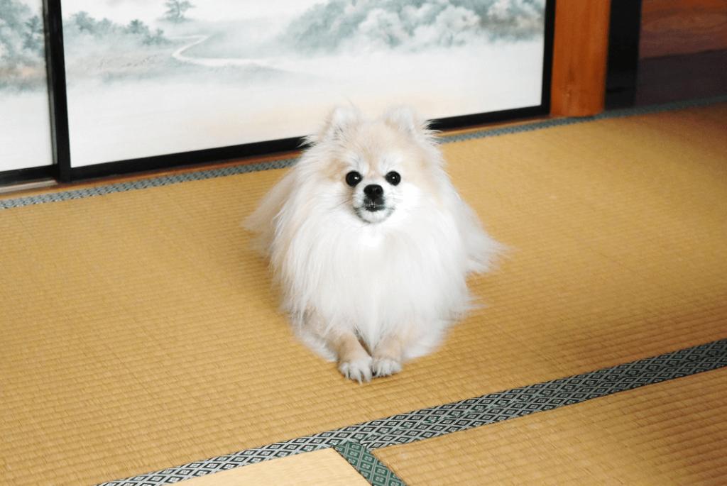 楽天トラベル、「ペットと泊まれる人気宿ランキング」を発表