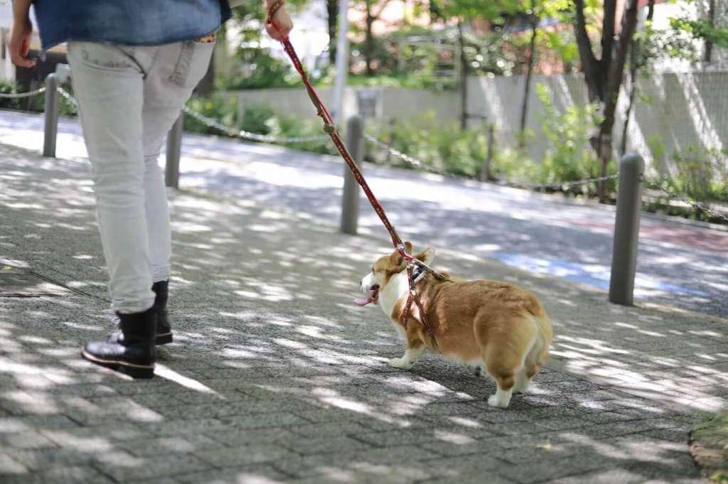 ペットテック『ぱうわん』、飼い主が獣医師を自宅へ呼べる「獣医師往診サービス」を東京23区で提供開始 〜電子カルテ機能で診療内容の可視化と蓄積が可能に〜