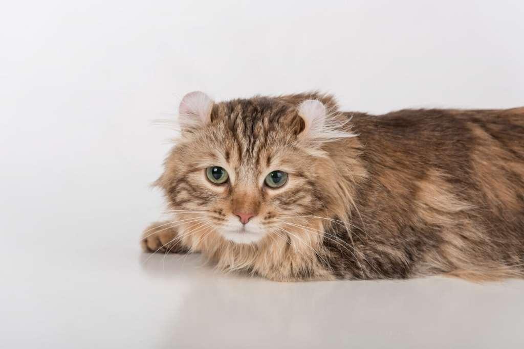 老猫には体重と運動量に見合った量のフードを与える