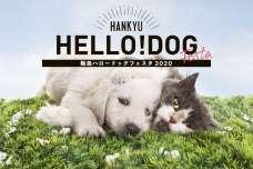 「阪急ハロードッグフェスタ2020」ワンちゃん・ネコちゃんのおしゃれなグッズや楽しいイベントがいっぱいのイベント開催!