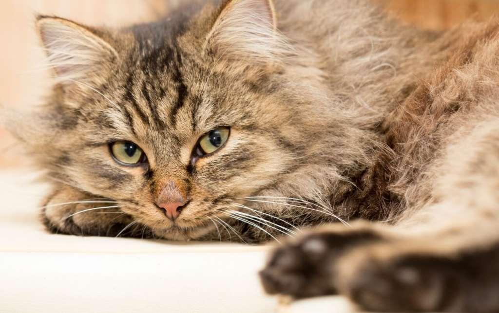 老猫は運動量を見てフードの量と回数を調整する