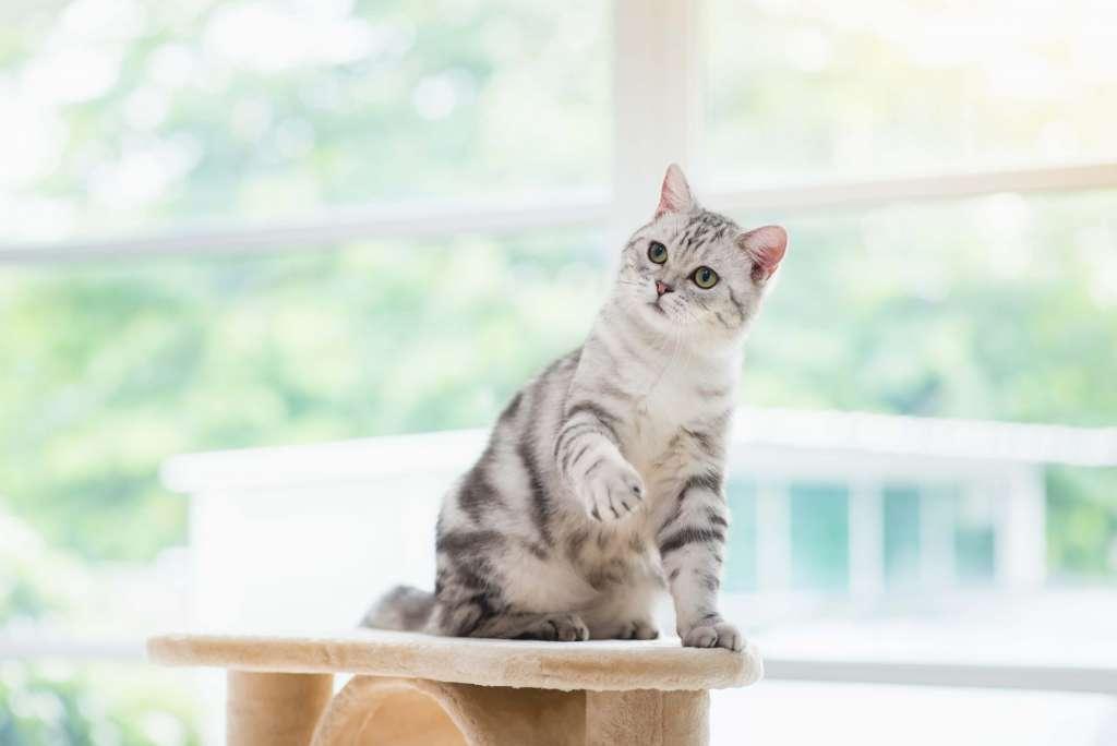 運動している猫は、ぜい肉がなく重量感がある