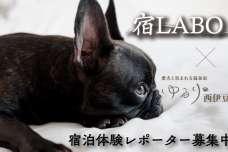愛犬と一緒に宿の魅力を伝えてみませんか?『ゆるり西伊豆』館名変更 記念企画