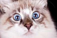 驚かせすぎはNG?猫がきゅうりを見て驚く理由について