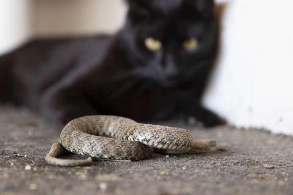 きゅうりを蛇と誤認している